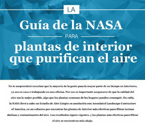 Nasa publica qu plantas purifican el aire en tu hogar - Plantas de interior que purifican el aire ...
