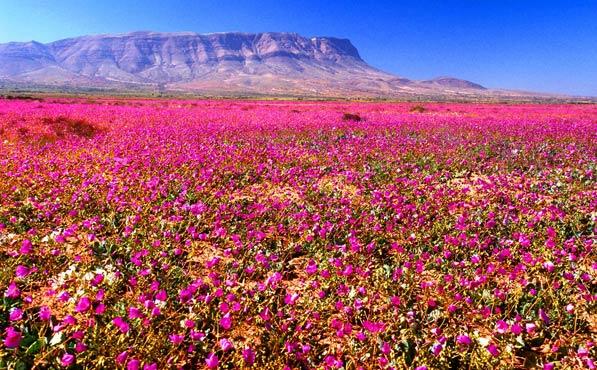 Qué visitar en Chile Desierto Atacama