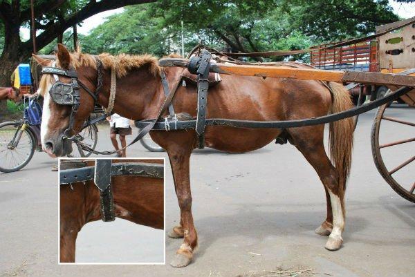 carruaje con caballos