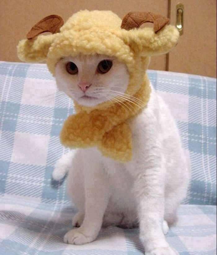 gato12