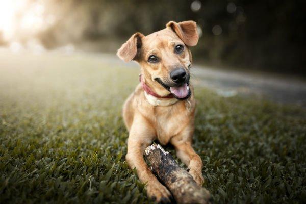 Carta Para Mi Perro Perdido Espero Que Hayas Sido Feliz