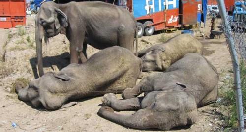 elefantesatayde