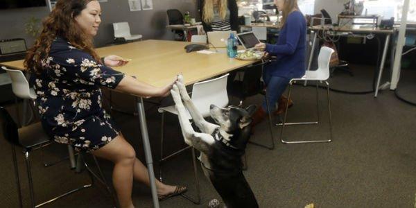 perros en la oficina ejemplo
