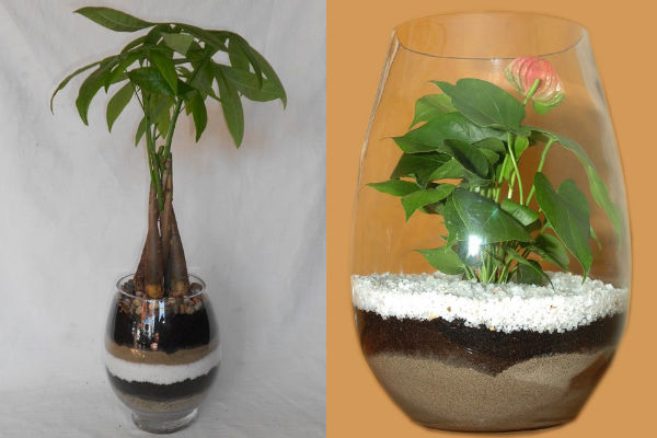 el rincon de las flores plantas