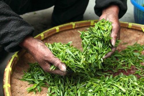 propiedades del té verde granja