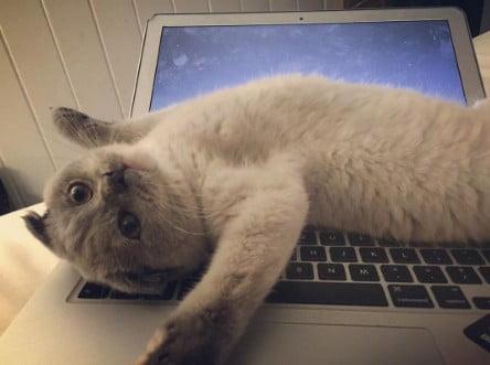 Necesitas un gato trabajar